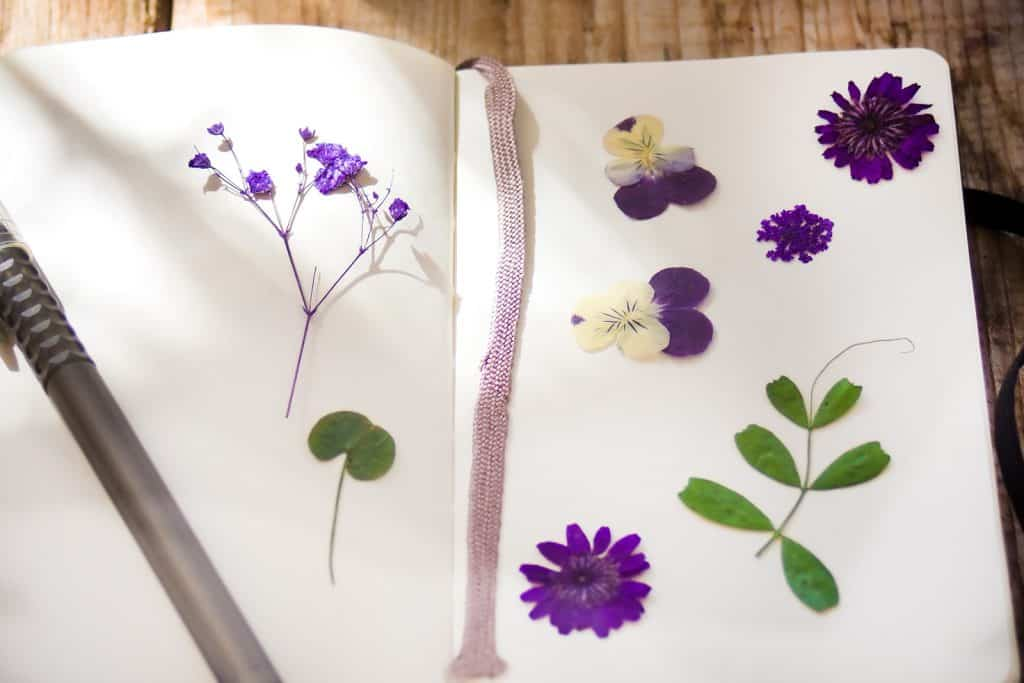 How to keep a nature journal - press flowers and leaves