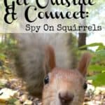 Get Outside & Connect: Spy On Squirrels