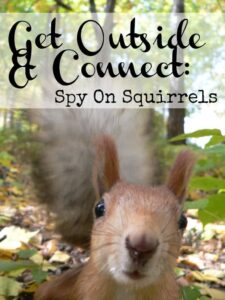 spy on squirrels