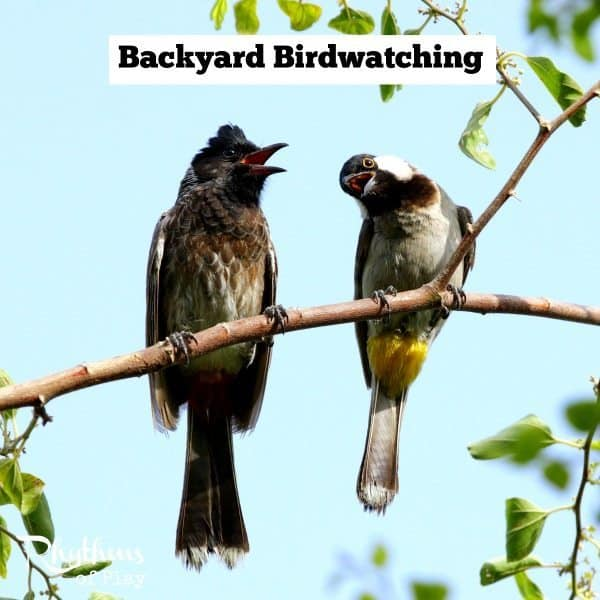 Backyard birdwatching is a fun activity for all ages. One of the best times of year to backyard birdwatch is late winter and early spring because most birds are returning north and mating. Both kids and adults love to observe birds and learn more about them. It's a great way to study nature in your own backyard!