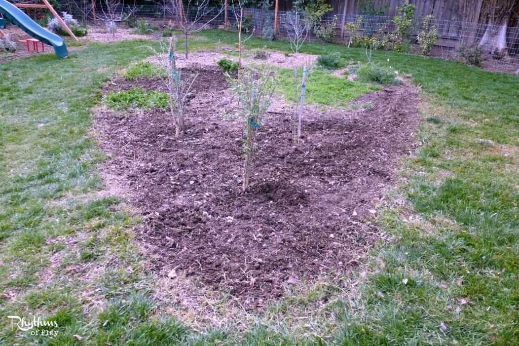 Easily remove Bermuda Grass