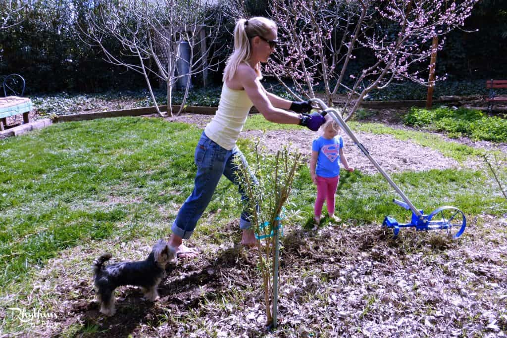 gardening with kids how to plant grass rhythms of play