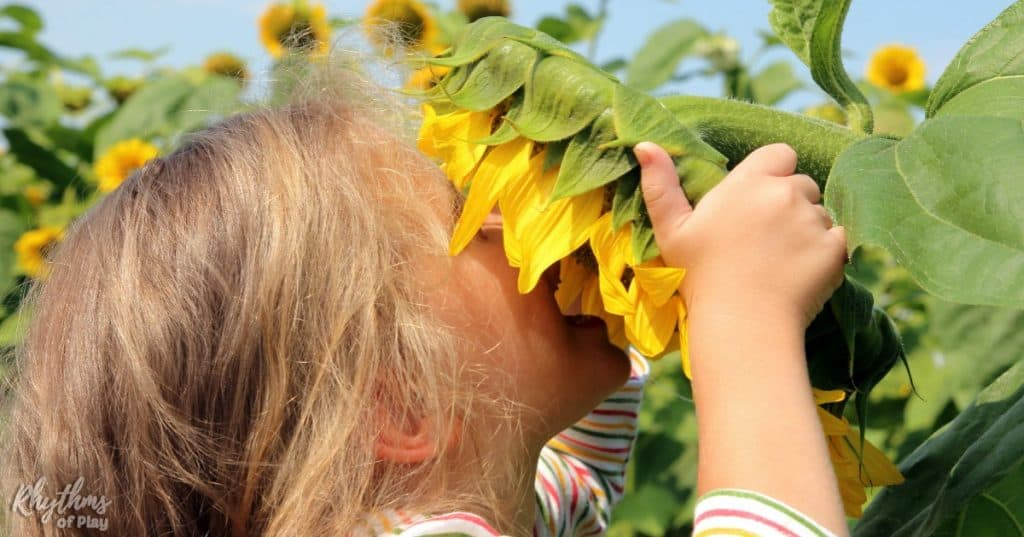 How To Plant Sunflowers With Kids Rhythms Of Play