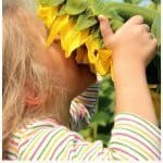 Planting Sunflowers with Kids