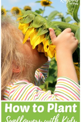 How to Plant Sunflowers with Kids