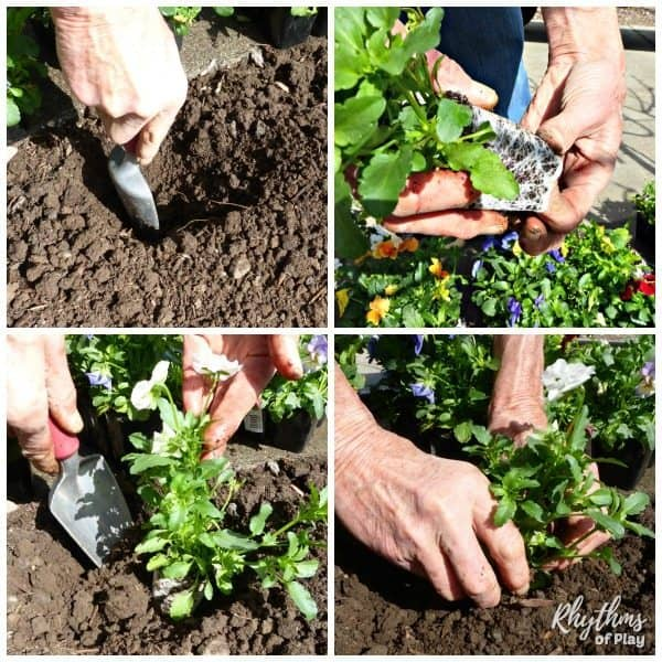 How to plant a flower step by step