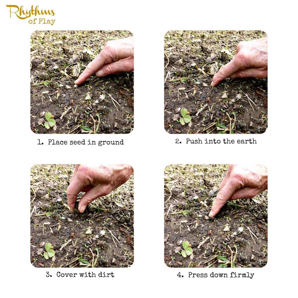 good how to plant sunflower seeds Part - 3: good how to plant sunflower seeds idea