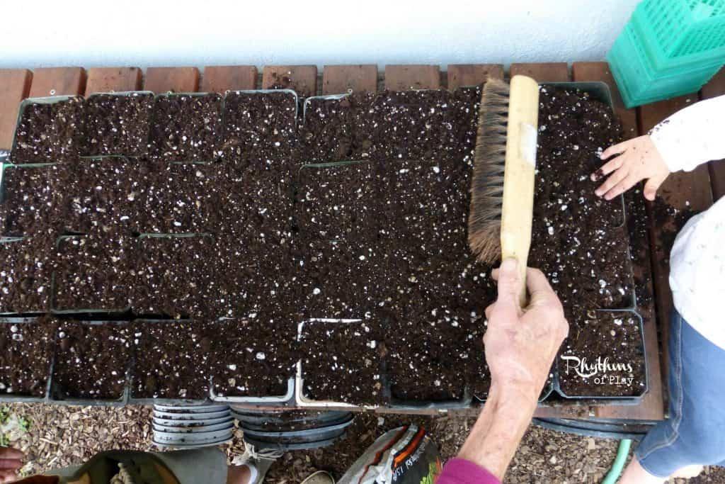 Organic Gardening with Kids: Starting Cucumbers & Melons | Rhythms