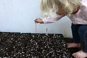 Organic gardening with kids: starting cucumbers & melons