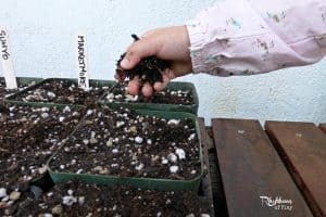 Organic gardening with kids soil