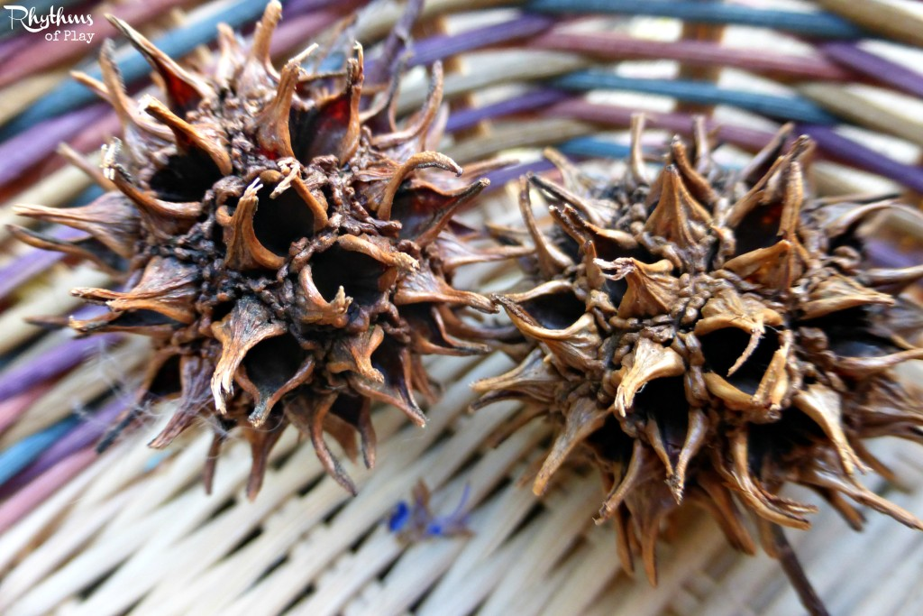 Seed pods for nature basket