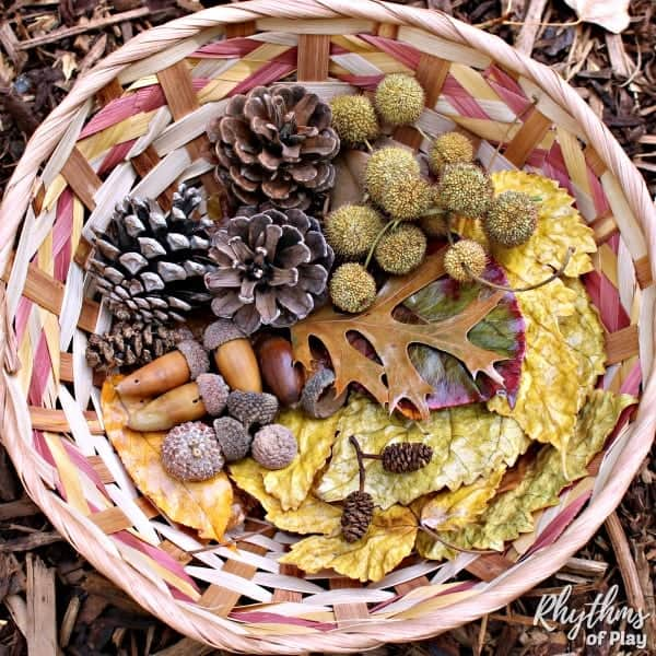 fall nature sensory bin