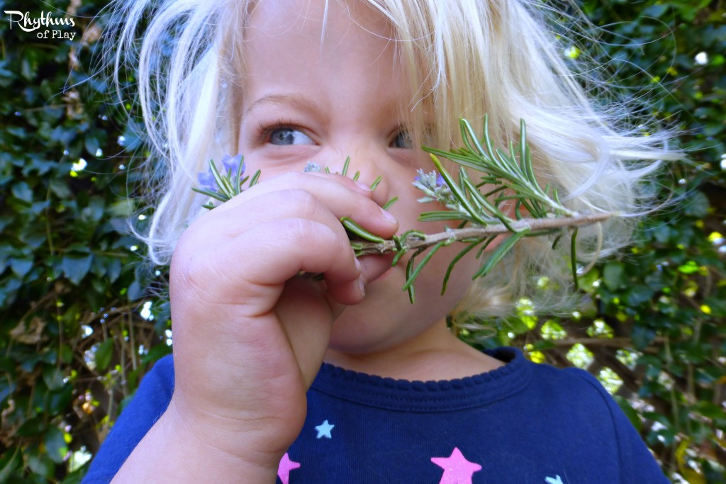 rosemary for the sense of smell