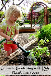 Organic Gardening with Kids: Plant Tomatoes