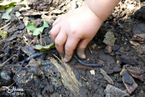 Investigate worms - A fun learning activity for kids!