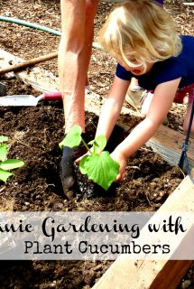Organic Gardening with kids: Plant Cucumbers