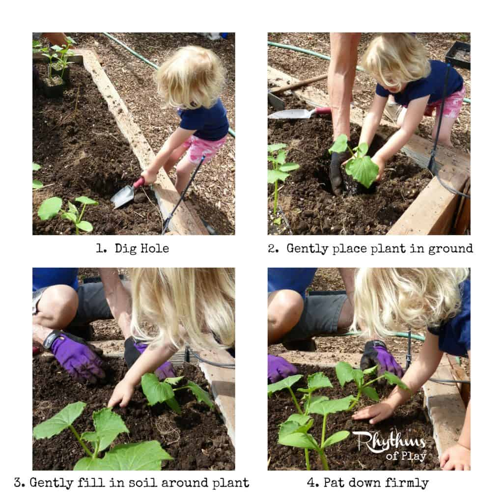 Organic gardening with kids - how to plant cucumbers