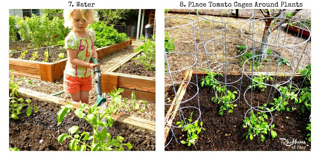 How to plant tomatoes