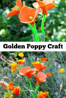 Golden Poppy Craft