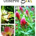 Get Outside & Connect: Observe Bees
