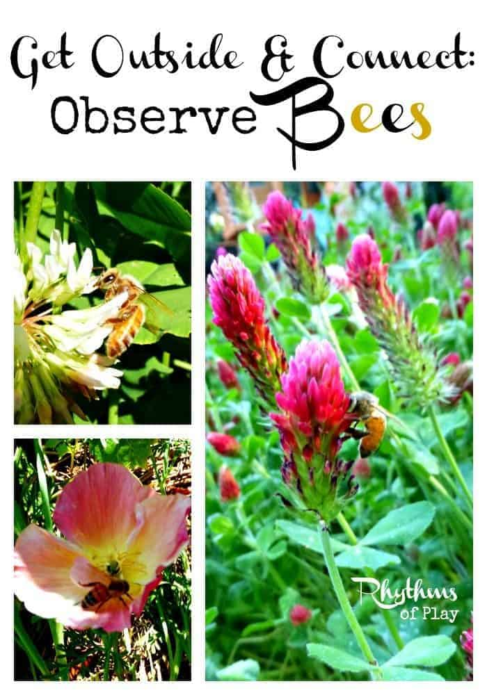Observe Bees -- A fun activity to do with your kids!