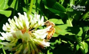 Observe bees -- a fun activity to do with kids!