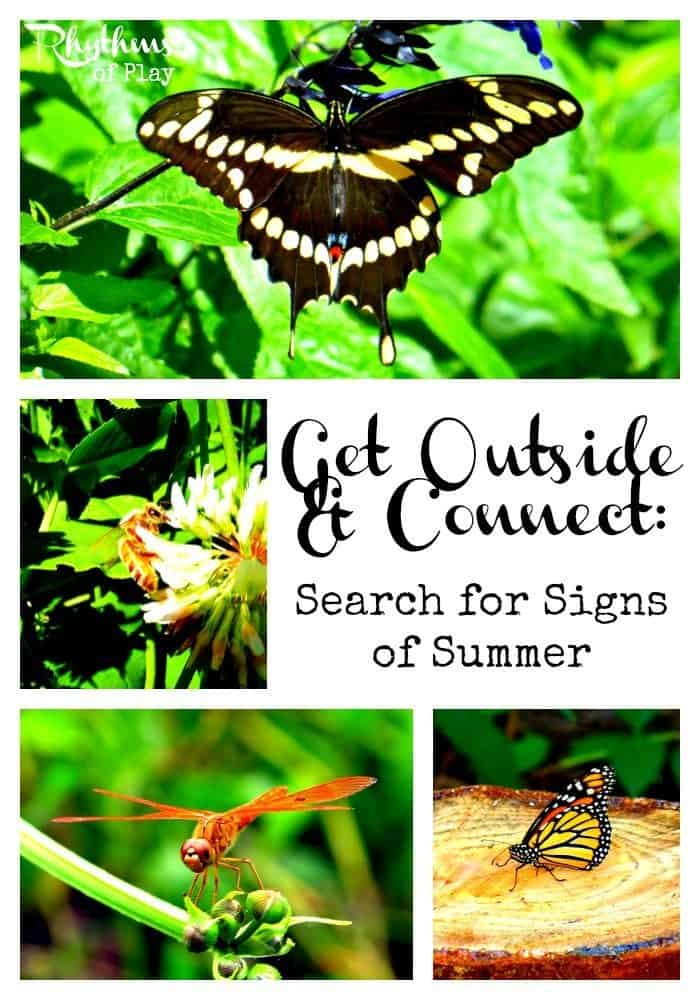 Search for signs of summer