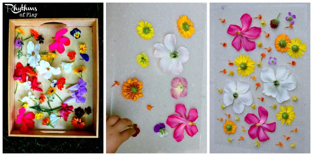 Pick Flowers and Make Suncatcher
