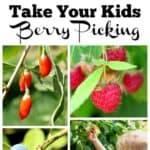 Take Your Kids Berry Picking
