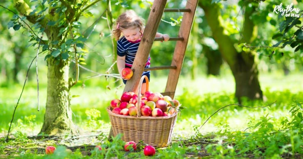 little girl picking apples in an orchard with basket and ladder