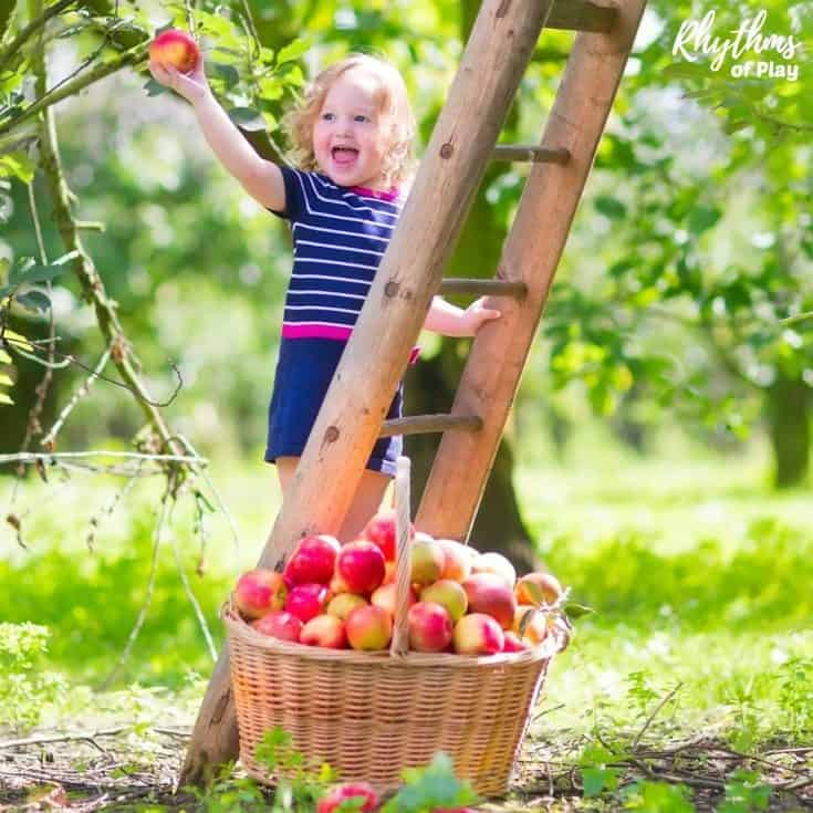 apple orchard field trip ideas for kids with apple activities, crafts, books and recipes to try!