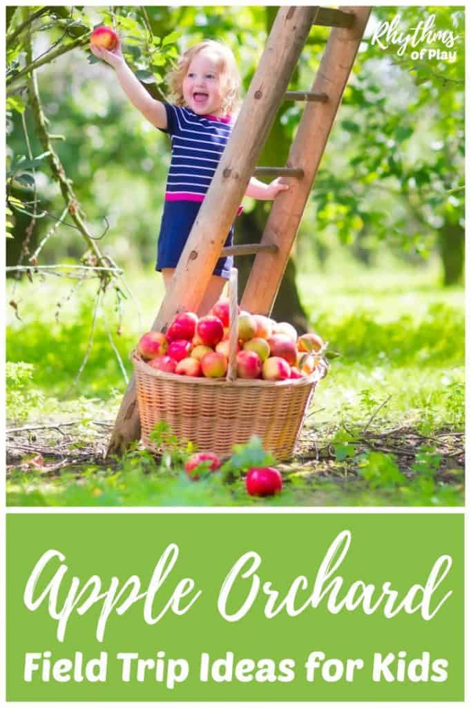Try some of these apple orchard field trip ideas this fall. Visiting an apple farm is a fun activity for a class field trip or a family adventure. Includes fun apple learning activity's, crafts, books, and recipes to enjoy the fruits of your labors!