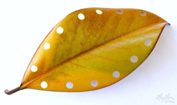 Fall leaf lacing beginning sewing project for kids using sturdy fall leaves like this one.