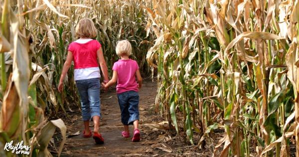 Corn maze family field trip guid