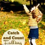 Catch and Count Falling Leaves