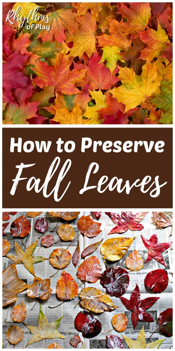 How to preserve leaves