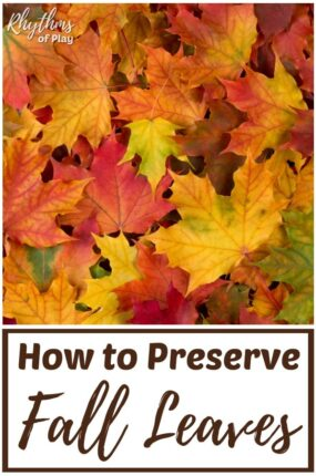 How to preserve leaves and store to use for nature crafts