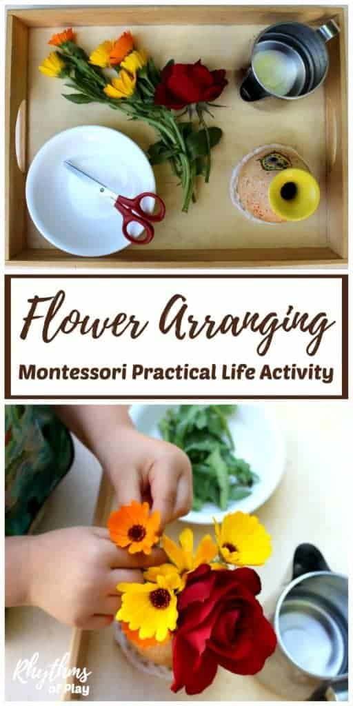 Montessori practical life activities are designed to help children develop logical thought and independence.This flower arranging Montessori practical life activity for kids is best for kindergarteners, preschoolers, and older toddlers who have had a lot of experience with skills such as carrying a tray, pouring, and using scissors for cutting. You can adapt your flower arranging activity according to your child's age and experience.