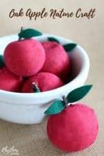 Oak Apple Nature Craft