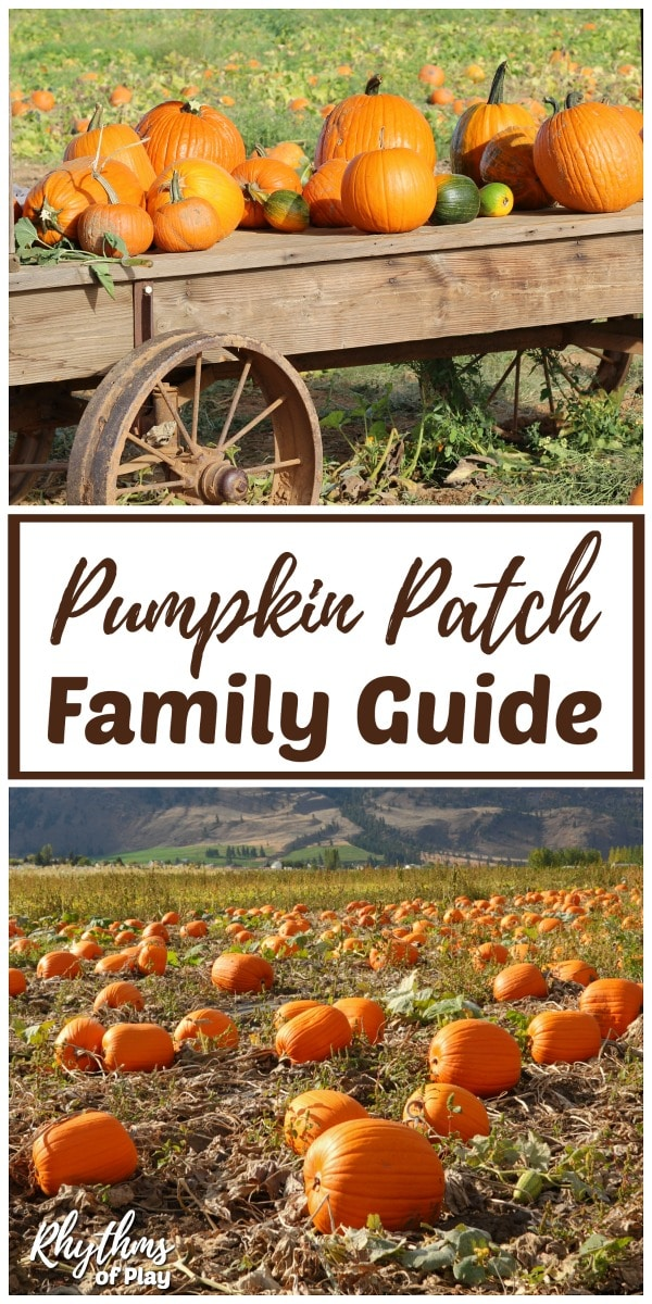 Pumpkin patch family field trip ideas