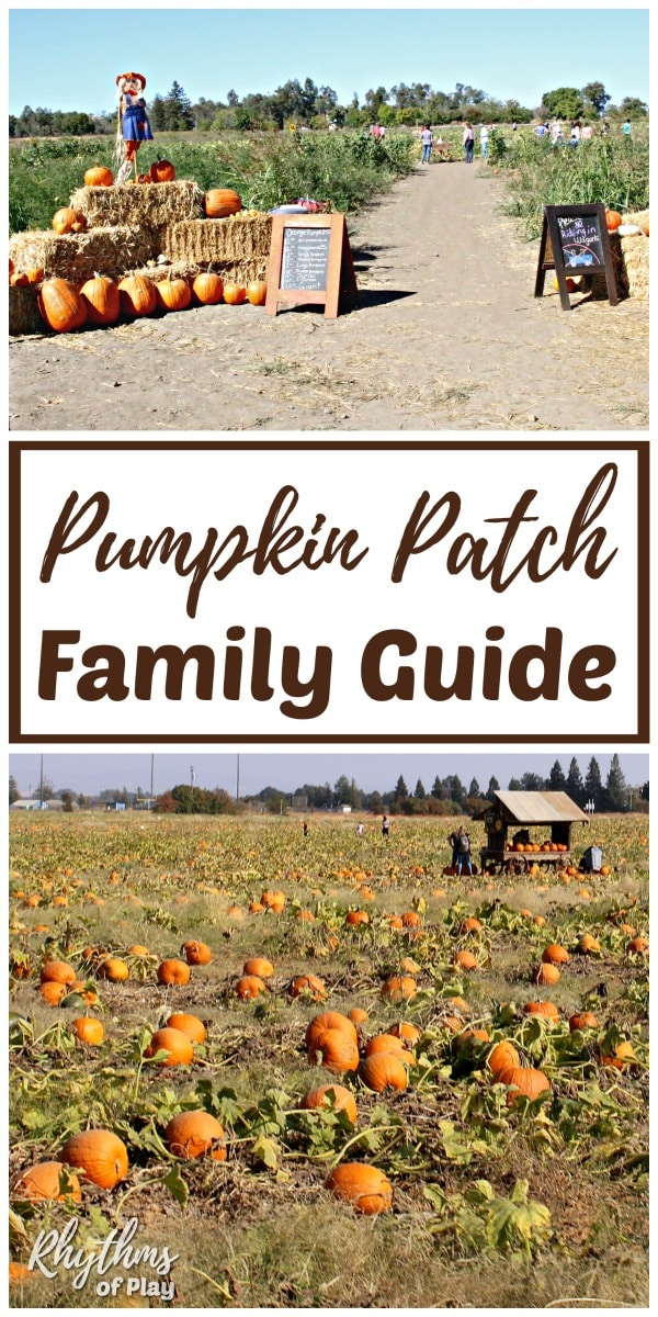 Pumpkin patch field trip ideas for families
