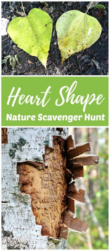heart shaped leaves and tree bark found on a nature scavenger hunt