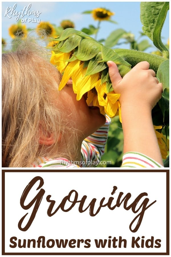 how to plant sunflower seeds and grow a sunflower fort playhouse for kids