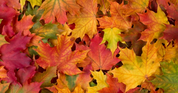 How to preserve fall leaves fb