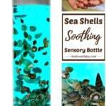 seashell calming sea shells sensory bottle diy