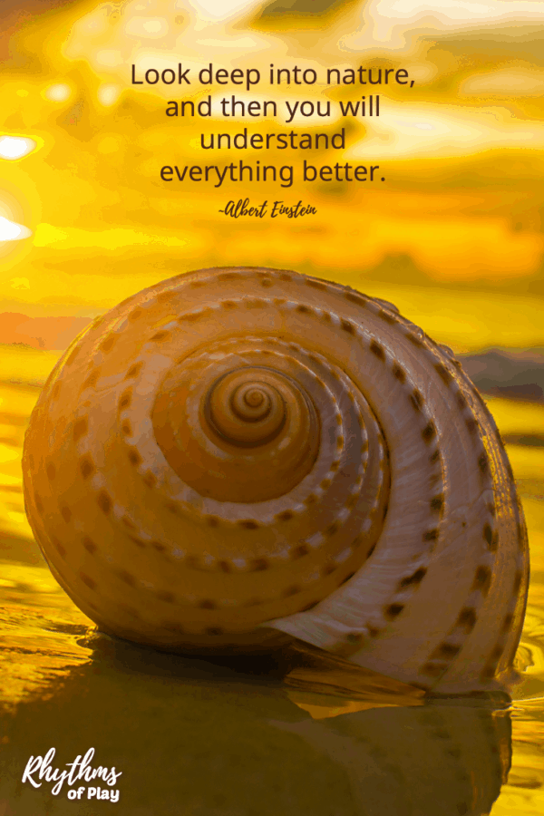 "Nautilus shell with quote, ""Look deep into nature and then you will understand everything better."" Einstein"