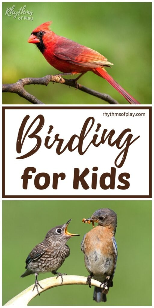 Birding for kids - birds doing funny things
