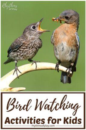 bird-watching birding activities for kids from toddlers to teens