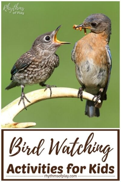 bird-watching birding activities for kids from toddlers to teens