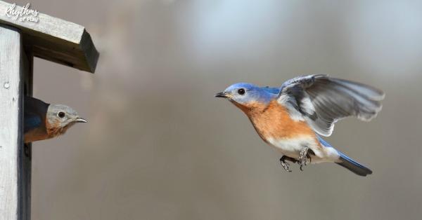 Bird flying into a birdhouse